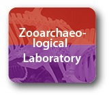 logo Zooarchaeological Lab